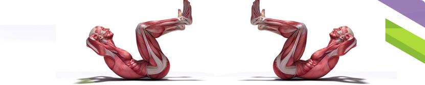 Anatomy figures performing crunch