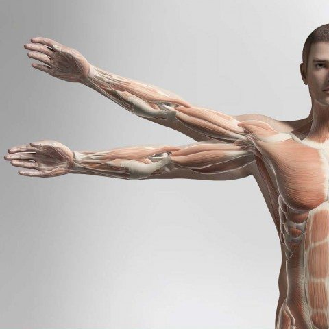 Anatomy for Sports Massage Sample_Page_12