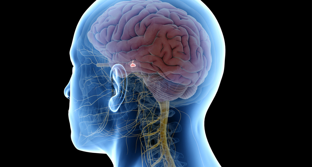 The pituitary gland controls hormones in the body