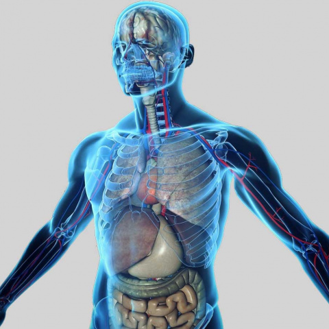 Anatomy Figure Manual Cover